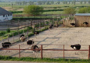 Ферма страусов (Абинский экзопарк)